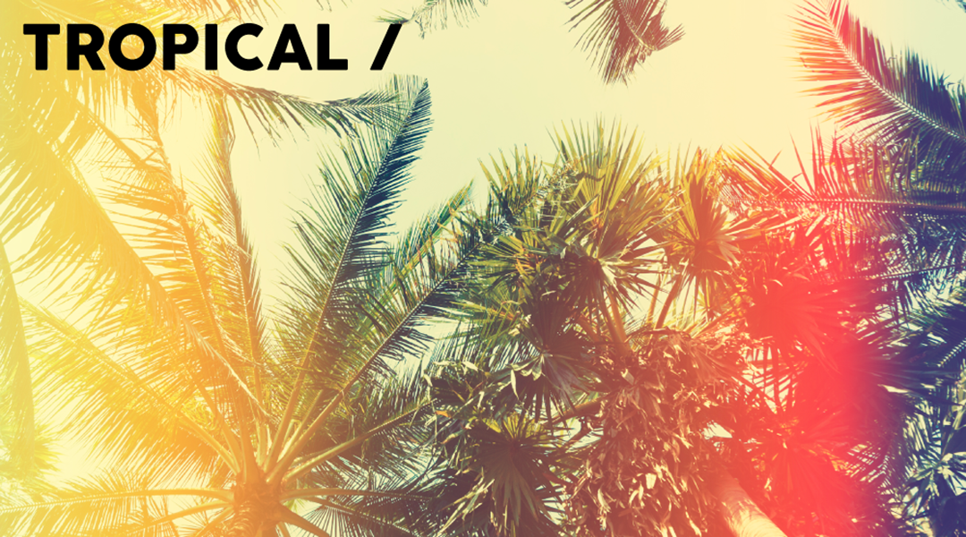 Tropical Banner 2