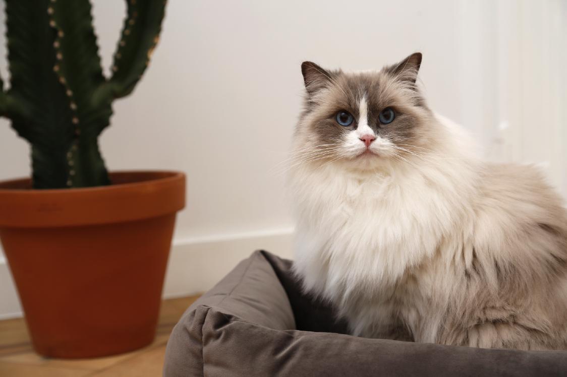 51DN Velvet Cat in Softbed