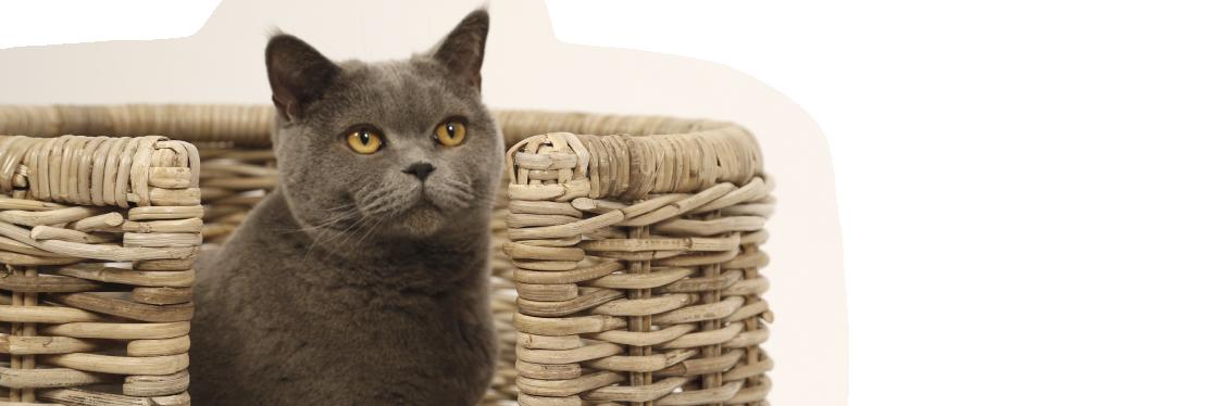 51DN Woven Cat ALOR CAT BASKET 2